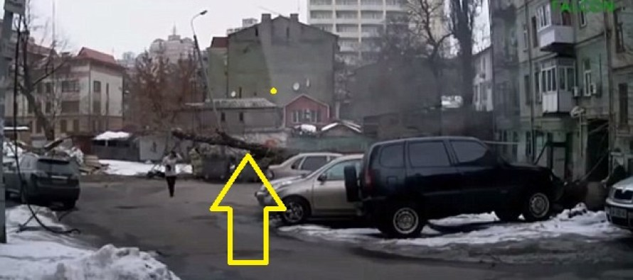 Woman narrowly avoids being crushed by a huge falling tree & is completely unflustered