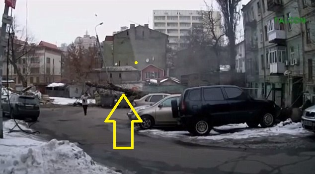 tree falls by woman