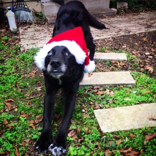 Dog Christmas2