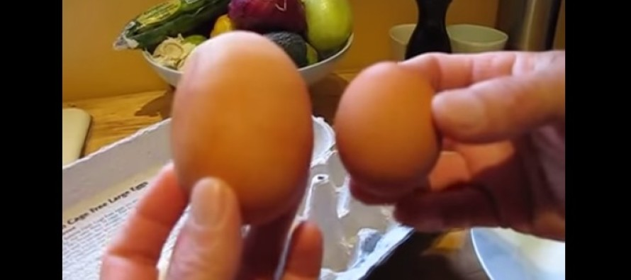 Hen Lays Massive Egg. But What Was Inside? OMG…