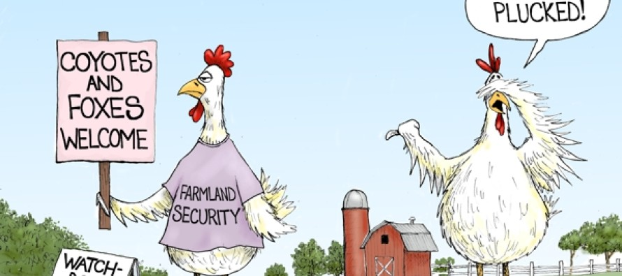 Politics Run-A-Fowl (Cartoon)