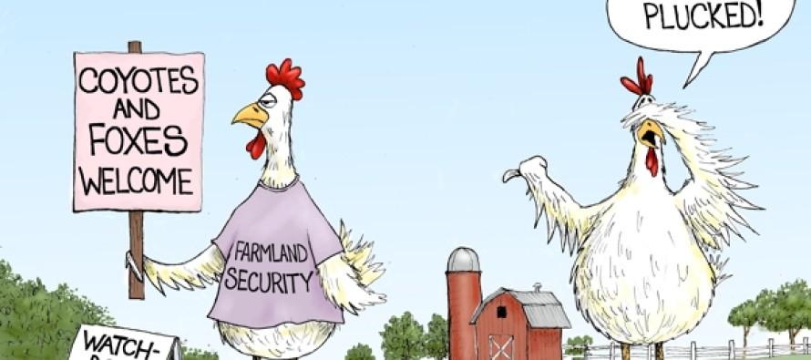 Politics Run-A-Fowl (Cartoon)