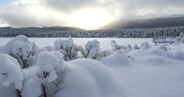 White Christmas1