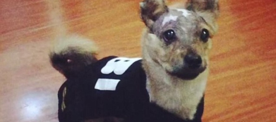 Puppy That Was Boiled Alive and Thrown Off a Building as 'Punishment' Makes a MIRACLE Recovery