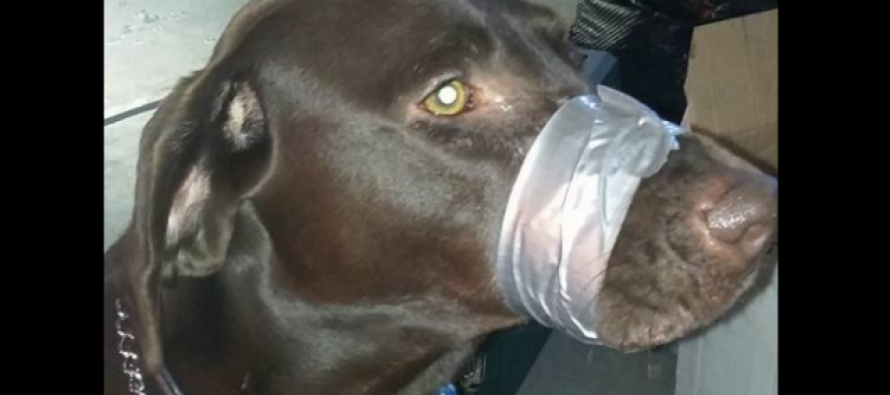 A Woman is Arrested After Posting a Photo Showing Dog With Mouth Taped Shut