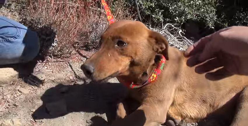 ginger gets rescued