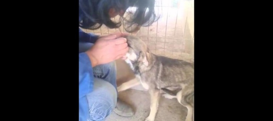 When an Abused Dog is Pet for the First Time, Your Heart Will Break