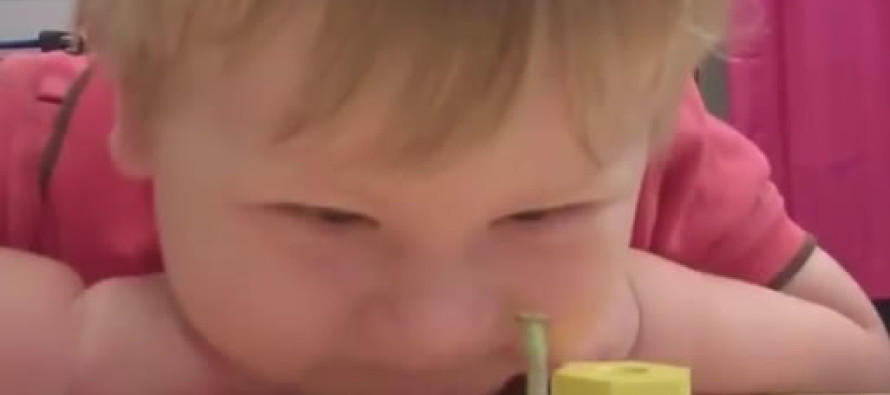VIDEO: The World's Bravest Praying Mantis 1. Baby 0.