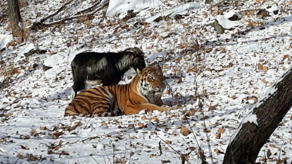 safari park website