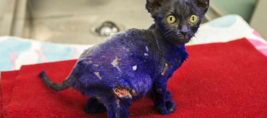 They Dyed Him Purple and Threw Him as Bait to the Dogs, But His Story Didn't End There