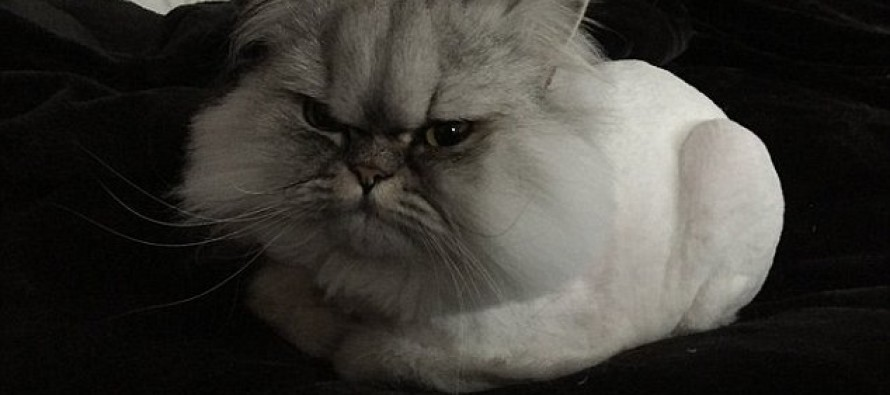 """You'll Know Why This Picture Of """"Angry Albert"""" The Cat In 'Cone Of Shame' Went Viral Once You See It"""