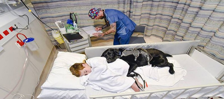 A Loyal Dog REFUSED to Let his Young Master Go to Surgery Alone