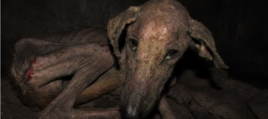 Video: This Starving Dog Was So Sick He Couldn't Even Eat And Then…