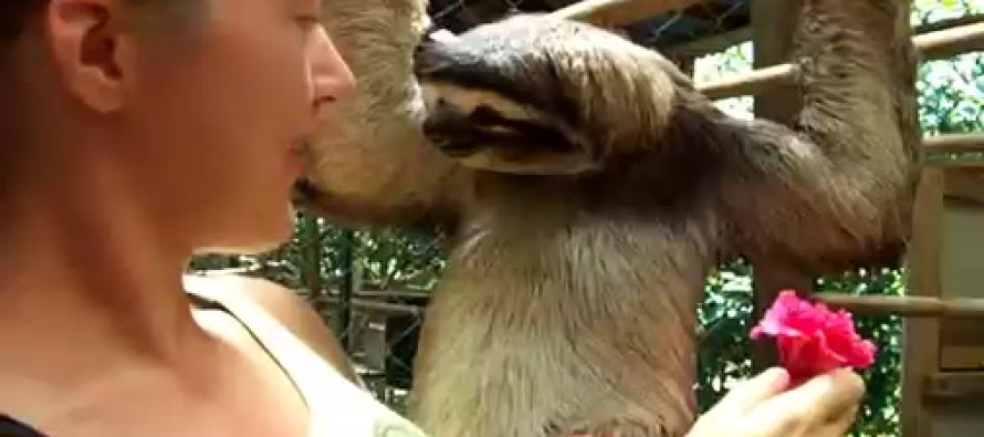 She Offered This Sloth a Flower, and He Had the Best Ever Reaction
