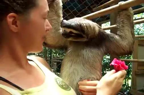 sloth flower