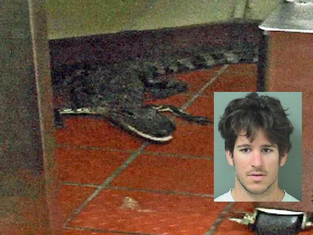 wendys alligator