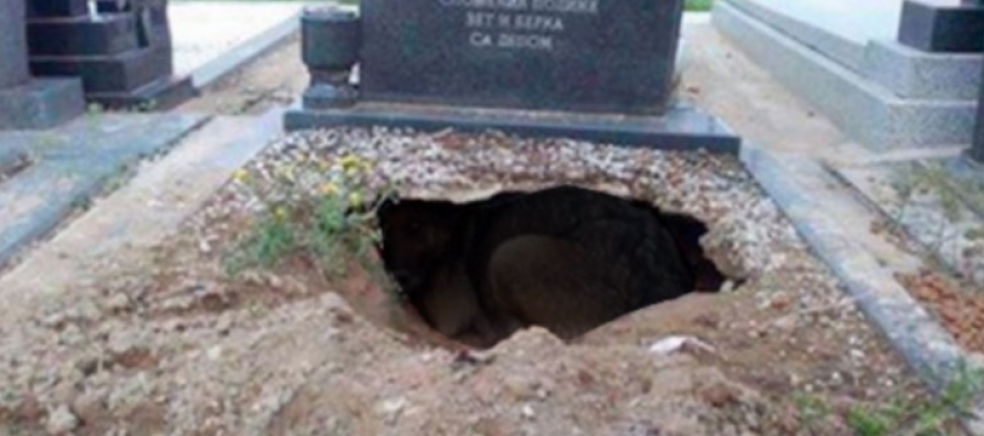They Heard Noises Coming from Hole in Cemetery… What Was Inside? OMG