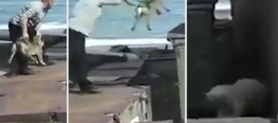 VIDEO: Man Throws His Yelping Dog to Hungry Polar Bear – For This HEARTBREAKING Reason…