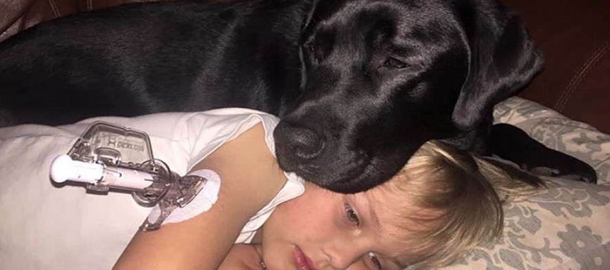 Dog Saves Life of Young Sleeping Master with Diabetes