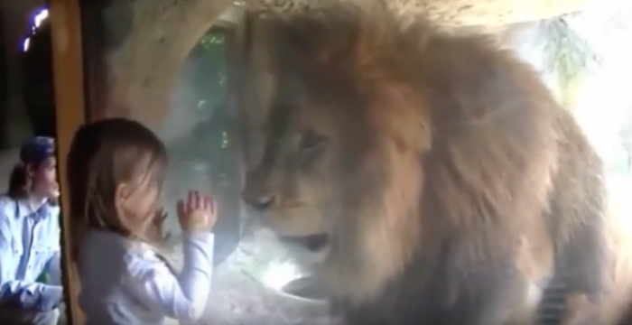 girl blows lion a kiss
