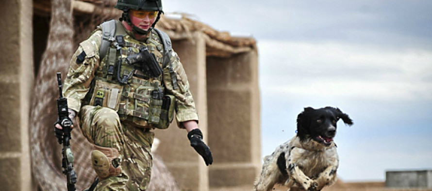 VISUAL: The Most Moving Pictures Of Military Dogs