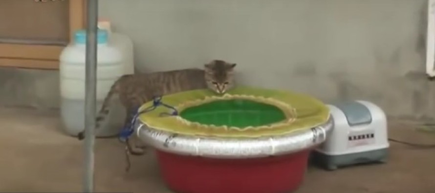 Cat Wants Live Octopus For Lunch – Learns Quickly It Was A BAD Idea…VIDEO