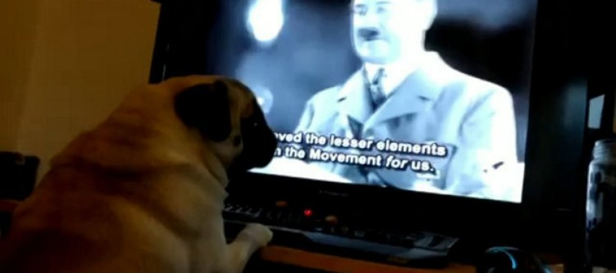 Man Arrested for Teaching His Dog a RACIST Trick
