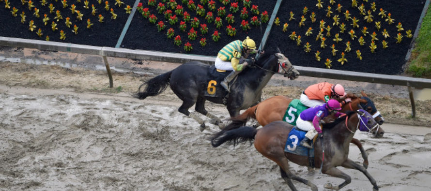 2 Horses Die, Jockey Seriously Injured at Preakness Day Undercard Race
