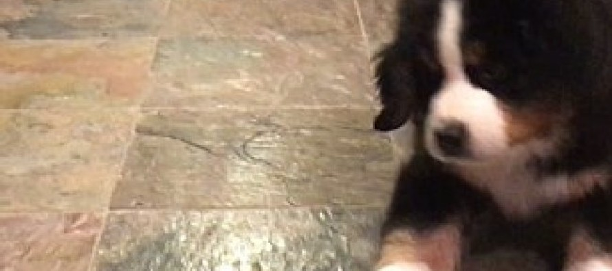 Watch This Adorable Pup Savagely Attack A Lemon [VIDEO]
