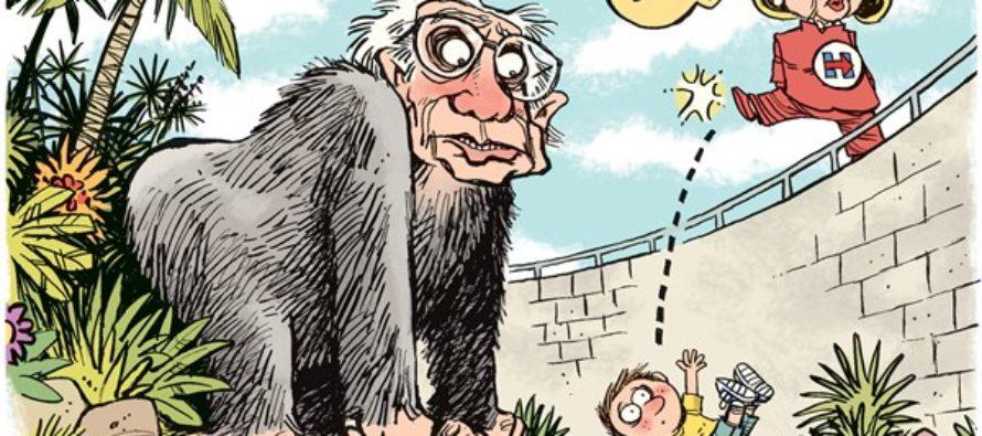 Bernie Gorilla (Cartoon)
