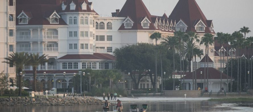 2 Year-Old Dragged into Lagoon by Alligator at Orlando Resort