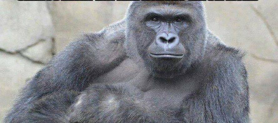 Abortion VS Gorilla Death in One BRUTAL Meme [VIDEO]