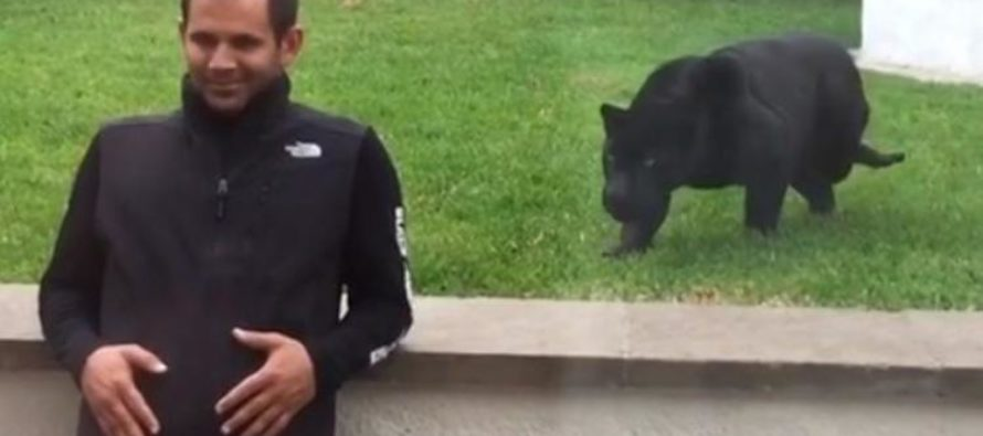 VIDEO: Heart Stopping Moment a Panther Sneaks Up & Pounces On a Defenseless Man… To Give Him a Kiss