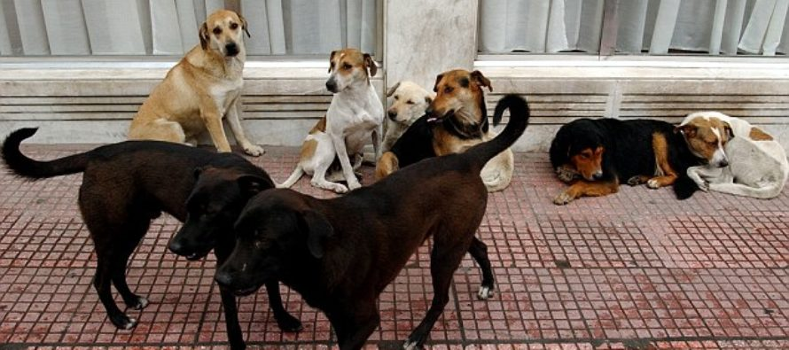 Horrible: She was EATEN ALIVE IN FRONT OF HER SON by a PACK OF STRAY DOGS