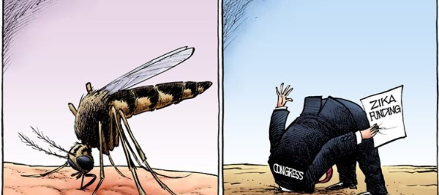 Zika Politics (Cartoon)