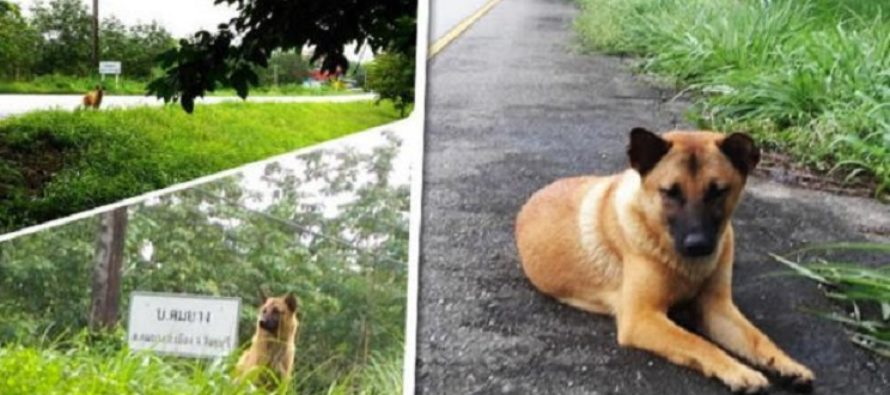 Famous dog killed in spot she waited a year for her owner to return to! [VIDEO]