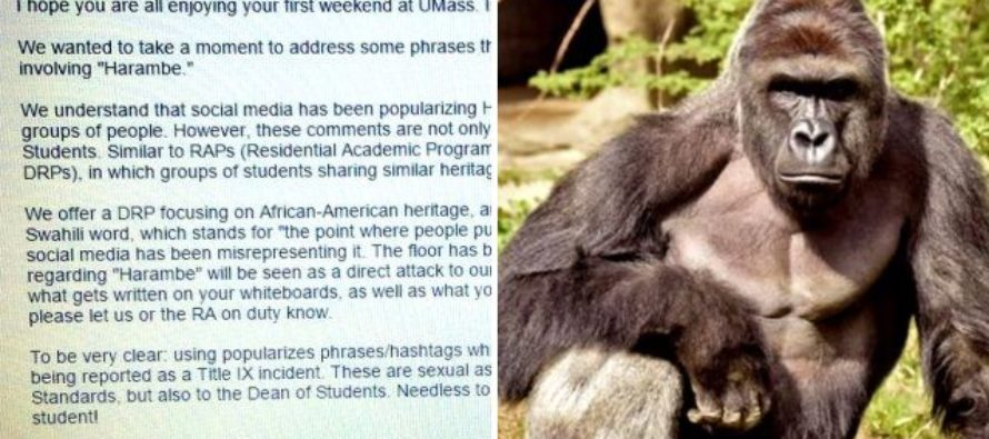 College bans white students from Harambe jokes because 'they're racist'