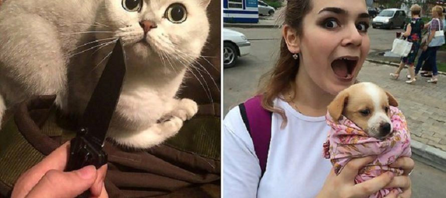 Russian Millennials Arrested For Adopting Cats & Dogs, Torturing Them And Posting It On Social Media [VIDEO]