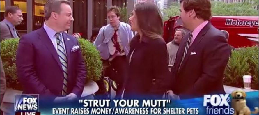 Protester Screams 'Bill Clinton is a RAPIST!' LIVE On Air On Fox! – VIDEO