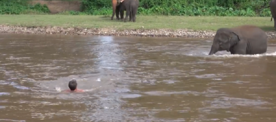 VIDEO: Elephant rushes into the water to save drowning man