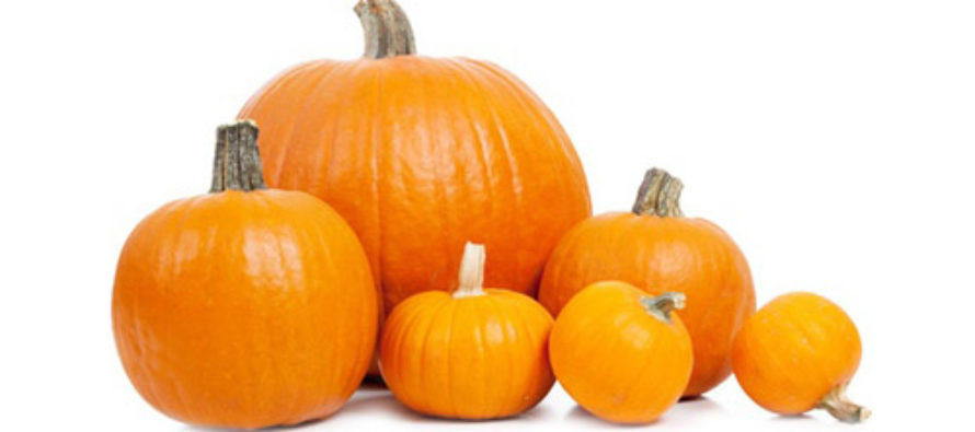 The Perilous Whiteness of Pumpkins