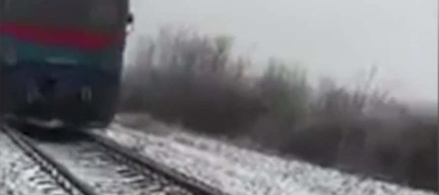 VIDEO: Loyal dog spends two days on snow-covered train track to protect his friend