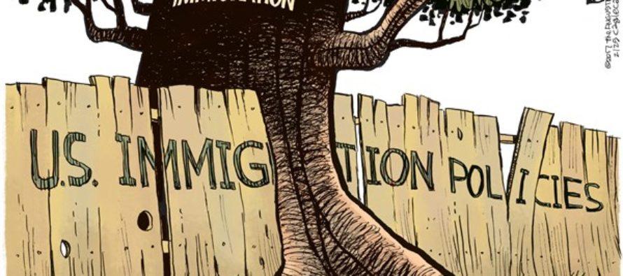 Immigration Tree (Cartoon)