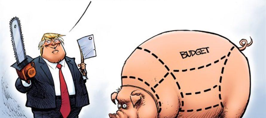 Budget Swine (Cartoon)