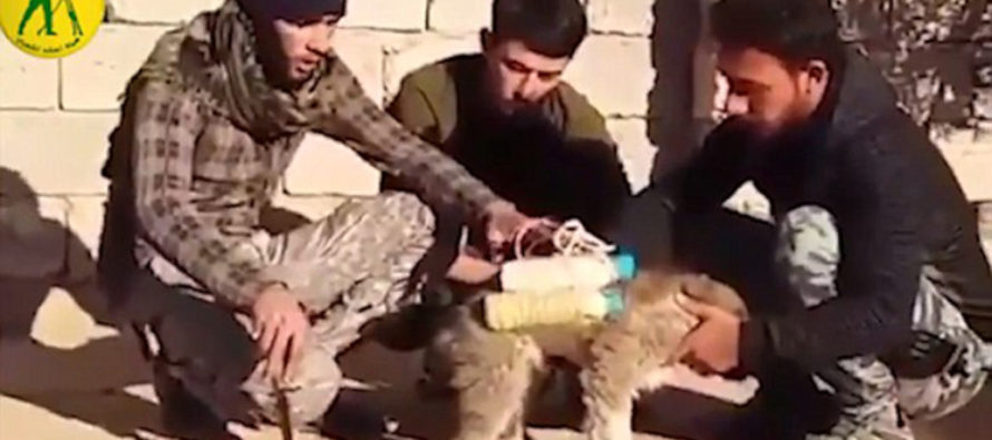 ISIS Straps Puppy suicide vest to cute puppy and then it's 'sent to frontline' [VIDEO]