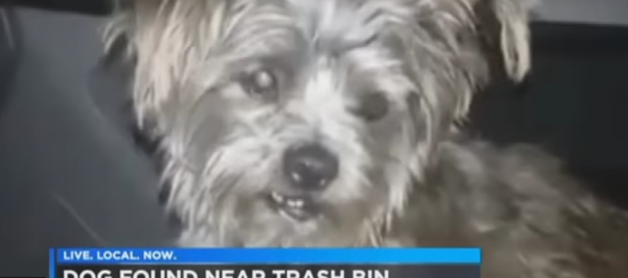 They Find Dog Abandoned Next To Heartbreaking Sign – Then Cop Explains What Happened To Owner [VIDEO]