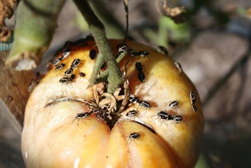 bugs-vegetables