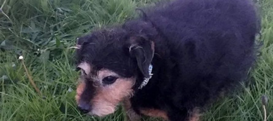 Lonely dog is left in a field with note around her neck after being abandoned