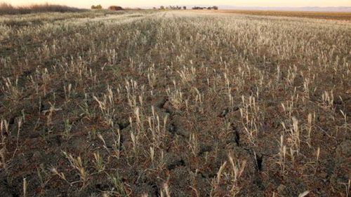 Farmer Fined $2.8 Million for Plowing His Own Field