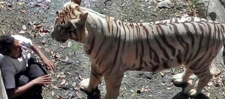 STUPID! Man Enters Tiger Pen & It's The Biggest Mistake of His Life